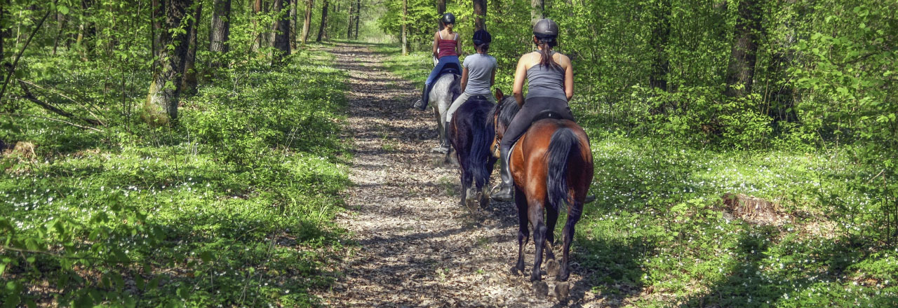 Horseback Riding in Sabine Parish